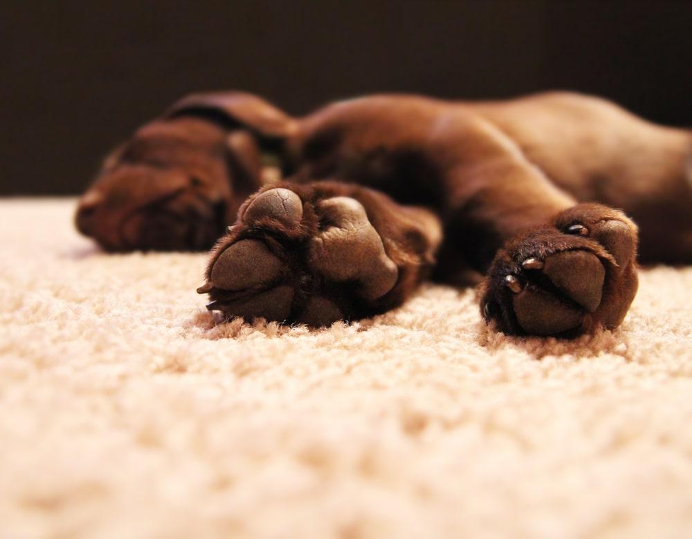 FCI Waukesha - Dog on Carpet